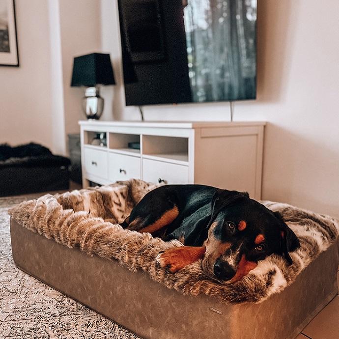 Box-mit-Hund
